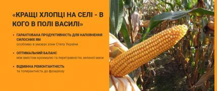 Насіння кукурудзи Mas 36A, Mas 25F, Amilior, Vasili